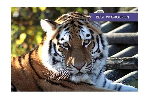 paradise wildlife park deals