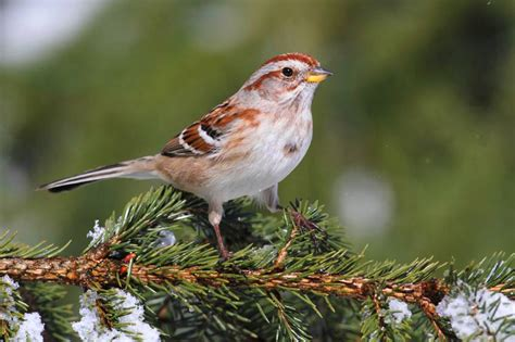 Home Decorating Stores by Wshg Net Blog Decorating A Bird S Christmas Tree The
