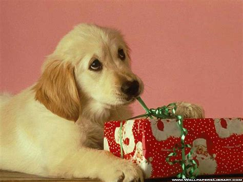 christmas wallpaper with dogs christmas dog wallpaper 2017 grasscloth wallpaper