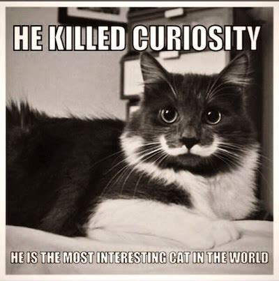 Mustache Cat Meme - catsparella hamilton the hipster cat mustache you a question