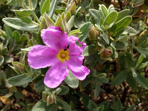 garden flowers identification garden flower identification 25 best ideas about plant