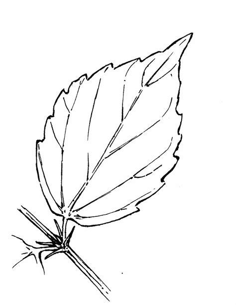 simple leaf coloring page simple leaf pattern az coloring pages