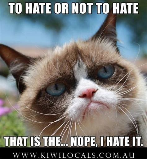 Clean Cat Memes - the gallery for gt clean grumpy cat memes