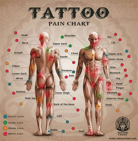 tattoo pain chart collarbone 43 best harley davidson tattoos images on pinterest