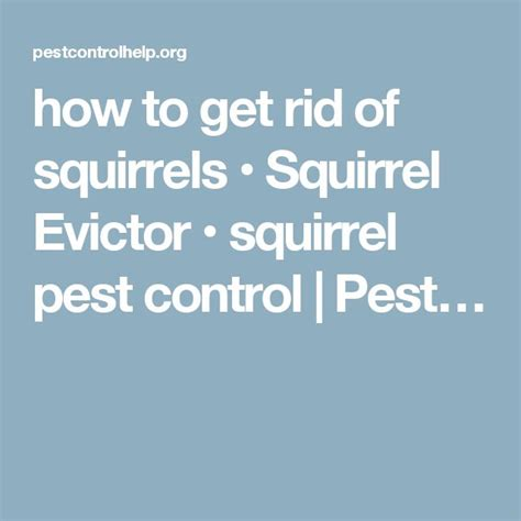 how to get rid of squirrels squirrel evictor squirrel