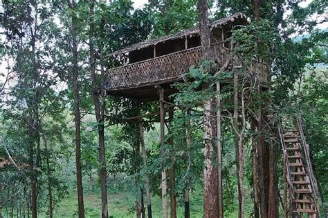 famous tree houses top 10 amazing treehouses somethin bizarre