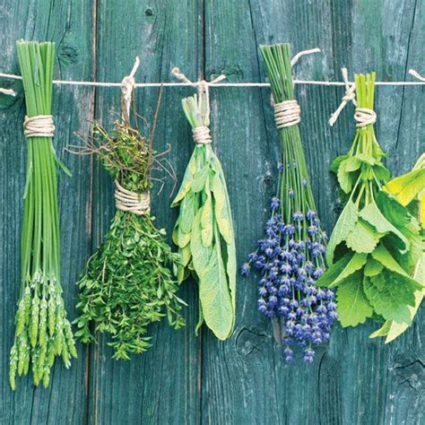 plant a container herb garden garden grit magazine 482 best food garden images on pinterest balcony