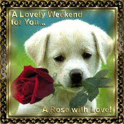 weekend rose for you! free enjoy the weekend ecards