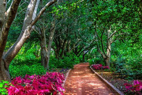 pathway pictures pathways of clark gardens