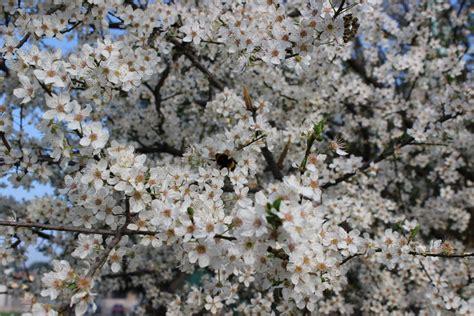 fiori bianchi per te fiori bianchi per te te ne andrai dizy foto