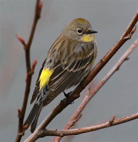 winter s for the birds in sacramento area the sacramento bee