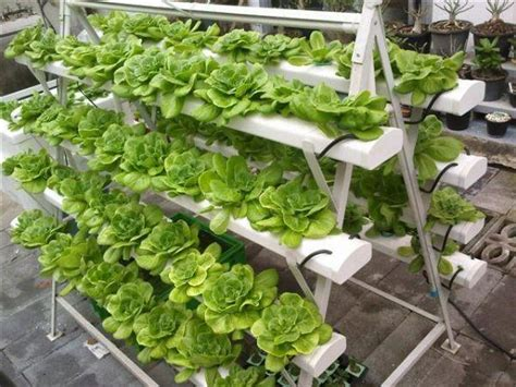 how to build a hydroponic vegetable garden food source how to start a hydroponic garden at home