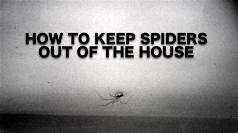 how to keep spiders out of the house spiders how to keep them out the house daily vlogs inspiring a healthier you youtube