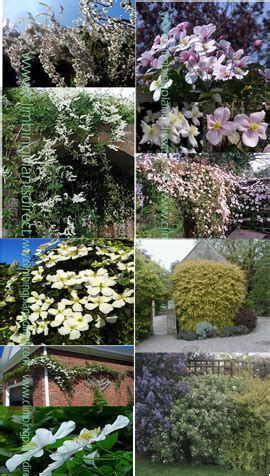 fast climbing plants fast growing climbers