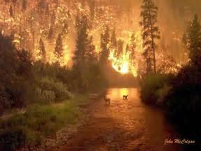 amazon black friday movie lightning floresta fogo 4k hd wallpaper