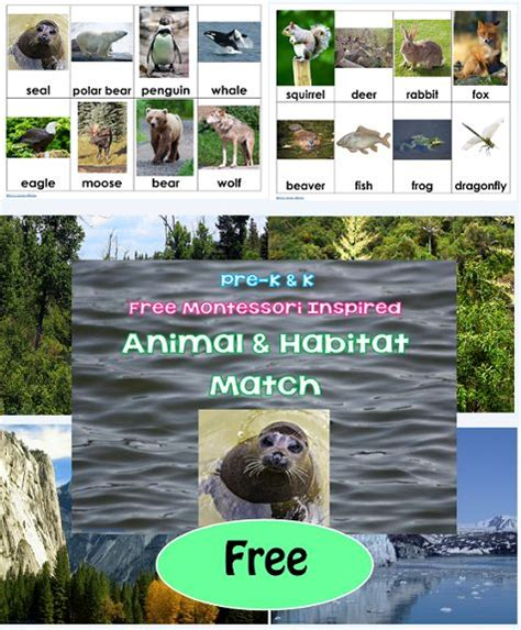 printable animal habitat cards pinterest the world s catalog of ideas