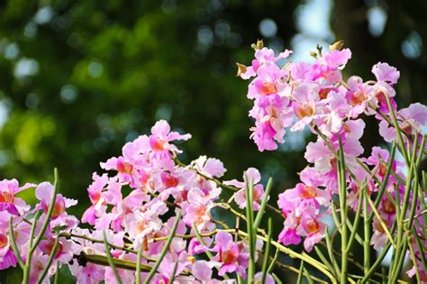 Orchid Garden by Singapore S Orchid Garden A Flower Heaven Bob