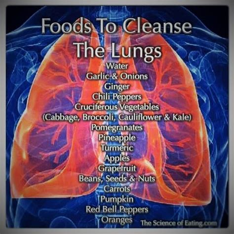 Lung Detox Herbs by Lungs Food And List Of Foods On