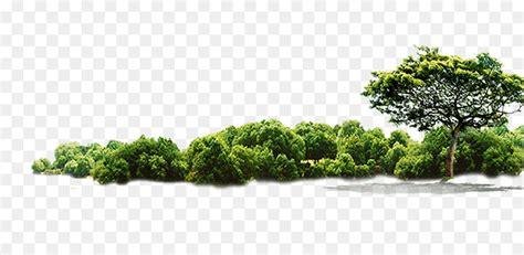 tree jungle green tree png 896 422 free