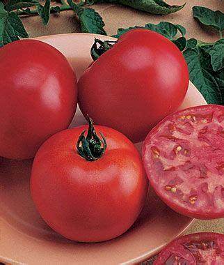 Big Hybrid Tomato 10 Benih bush big boy tomato seeds and plants vegetable gardening at burpee