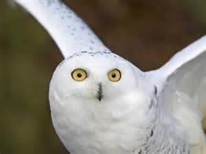Barn Spider Lifespan Owl Facts For Kids Owl Habitat Amp Diet