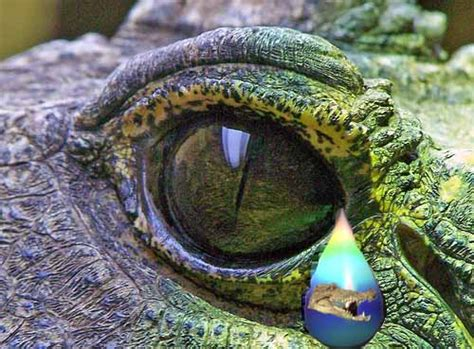 Crocodile Tears « Café Crem