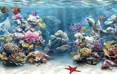 Marine 35gr Makanan Ikan Laut Free fond d 233 cran aquarium