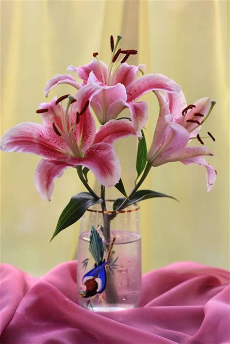 imagenes de flores mas bellas del mundo 60 fotograf 237 as de las flores m 225 s hermosas del mundo