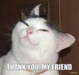 Thank You Cat Meme - welcome to memespp com