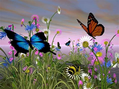 In The Meadow in the meadow butterflies wallpaper 13492903 fanpop