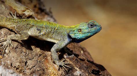 lizard san diego zoo animals plants