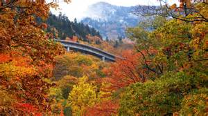 asheville fall colors fall color forecast 2012 travel tips