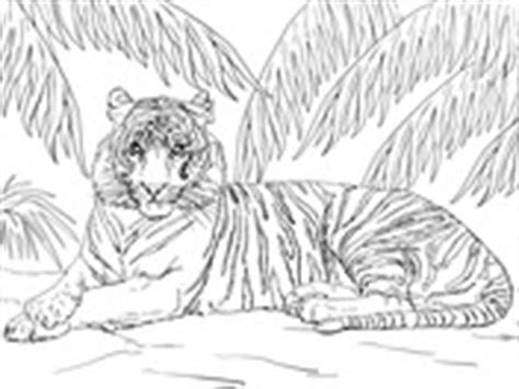 snow tiger coloring page snow tiger cub coloring page free printable coloring pages
