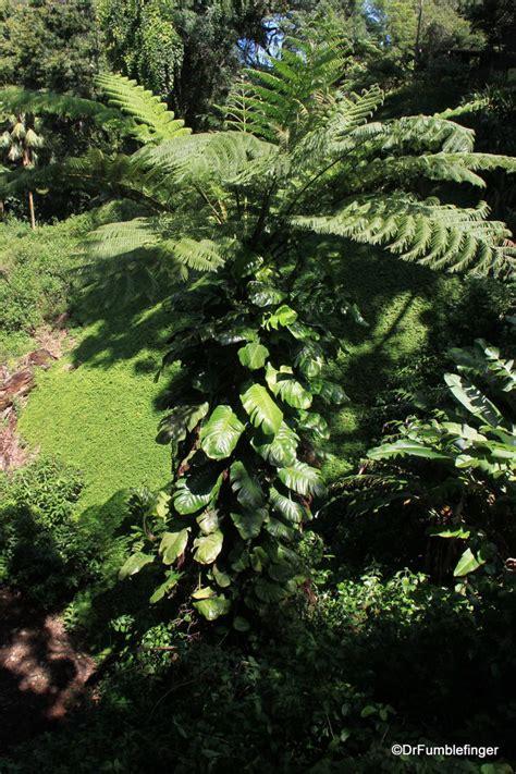 botanical garden oahu a tropical oasis wahiawa botanical garden oahu travelgumbo