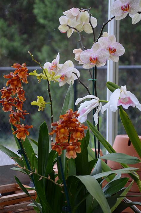 related keywords suggestions for orchid care after blooming