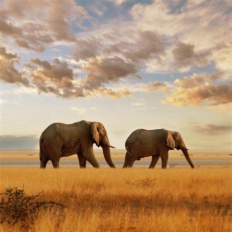 mission elephant rescue mission mission elephant missionelephant twitter
