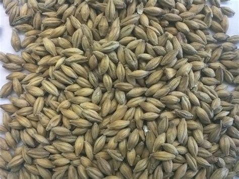 whole grains empty promises golden promise uk 1lb centennial homebrewing supplies