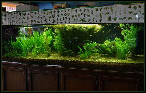 aquarium design application http www weatherson com photos 7s 31 freshwater tank jpg