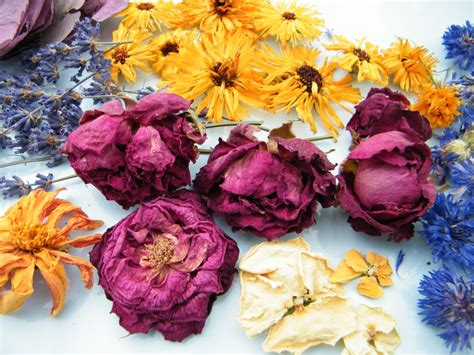 From The Garden Dried Flowers From The Garden Dried Flowers Diy Book Flower Press Free