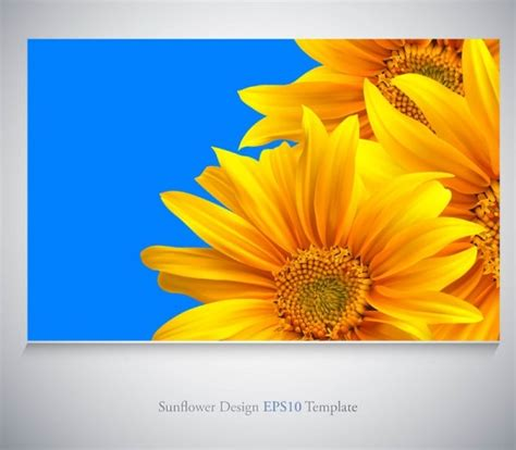 free downloadable sunflower business card template sunflower free vector 234 free vector for