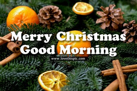 tangerine merry christmas good morning pictures   images  facebook tumblr