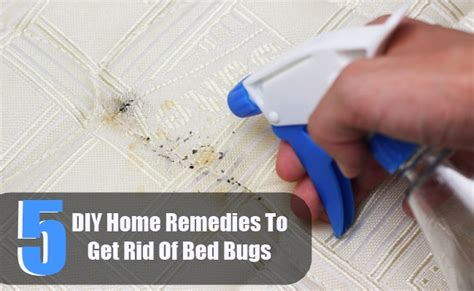 getting rid of bed bugs diy 5 diy home remedies to get rid of bed bugs diy home things