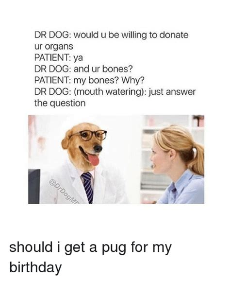 why should i get a pug 25 best memes about pugs pugs memes
