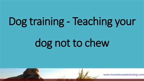 how to dogs not to chew not to chew are dogs blind when they are born