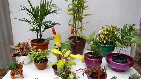 decoracion de interiores con plantas de sombra las macetas y las plantas de interior youtube