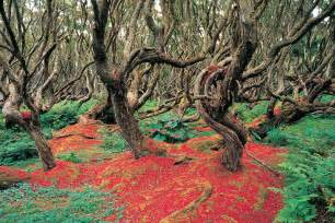 Crooked Forest Poland Feel 13 mystical forests that are still unexplored and