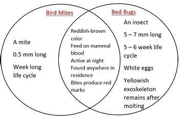 bird mites  bed bugs studycom