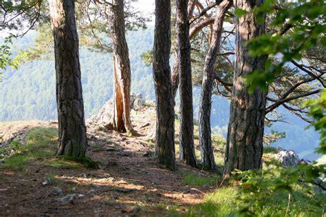 sigmaringen fasnetspa 223 in der entdecken sie den naturpark obere donau