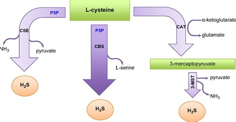 Hydrogen L by Hydrogen Sulfide Based Therapeutics And Gastrointestinal