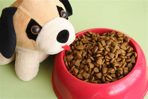 feeding puppies how to feed your puppies and dogs for sale sydney your pet network